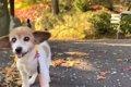 【秋のお散歩】16歳…の画像