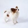 犬を飼う費用や用品…の画像