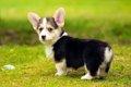 恐ろしい犬の椎間板…の画像