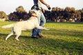 犬が飼い主に体当た…の画像