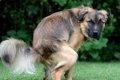 犬のふん、放おって…の画像