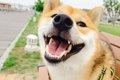 犬のボディランゲー…の画像