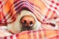 老犬のための災害対…の画像