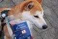 お魚系の犬のおすす…の画像