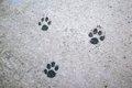 犬走りの語源につい…の画像