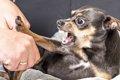 犬の咬傷事故予防の…の画像