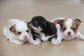 生後8週まで犬猫は親…の画像