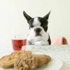 食事を食べない!犬…の画像