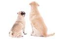 愛犬の犬種で飼い主…の画像