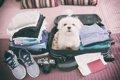 愛犬と一緒に旅行す…の画像