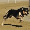 愛犬の脱走は不慮の…の画像