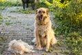 犬の換毛期がずれる…の画像