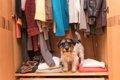 着なくなった服を犬…の画像