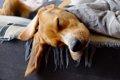 犬が眠いときに見せ…の画像