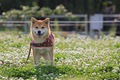 犬と公園を楽しむた…の画像