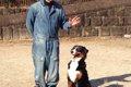 犬の社会化トレーニ…の画像