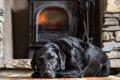 室内で犬を飼ってい…の画像