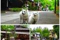 愛犬と一緒にドッグ…の画像