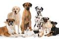 犬種別の「特性によ…の画像