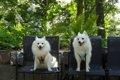 愛犬を連れて萌木の…の画像