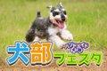 GW初日は犬祭!犬部…の画像