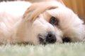 犬の頻尿について …の画像