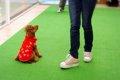 犬のしつけ教室で正…の画像