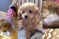 愛犬カノンの避妊手…の画像