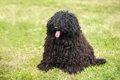 モップみたいな犬種3選の画像