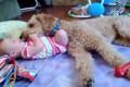 赤ちゃんとワンちゃ…の画像