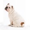 愛犬が寂しがりな飼…の画像
