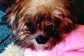 愛犬におすすめのタ…の画像
