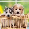 子犬のしつけの基本…の画像