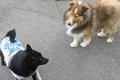 犬同士が初対面でも…の画像