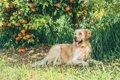 柑橘類に致命的な被…の画像