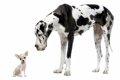 特定危険犬種につい…の画像