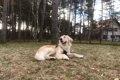 愛犬とリッチな旅を…の画像