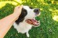 『飼い主に従順な犬…の画像