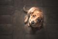 愛犬家に嫌われる?…の画像
