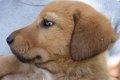 犬の嫌いな音を知っ…の画像