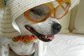 犬を擬人化すると、…の画像