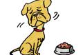 犬の急性膵炎につい…の画像