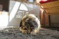 愛犬家におすすめの…の画像