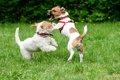犬同士の喧嘩を止め…の画像