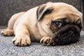 頑固な性格の犬がよ…の画像