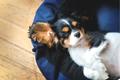 【室内犬が主流な現…の画像