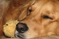 犬ジステンパーとは…の画像