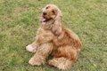 垂れ耳がかわいい犬…の画像