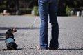 犬の散歩の仕方につ…の画像