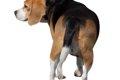 犬の気持ちは尻尾を…の画像